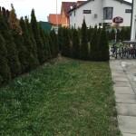 Rasenpflege vorher, ohne Gartenpflege von Garten Leopold