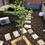 Dachgarten nach der Bearbeitung und Pflege von Garten Leopold